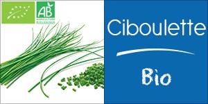 Ciboulette Bio